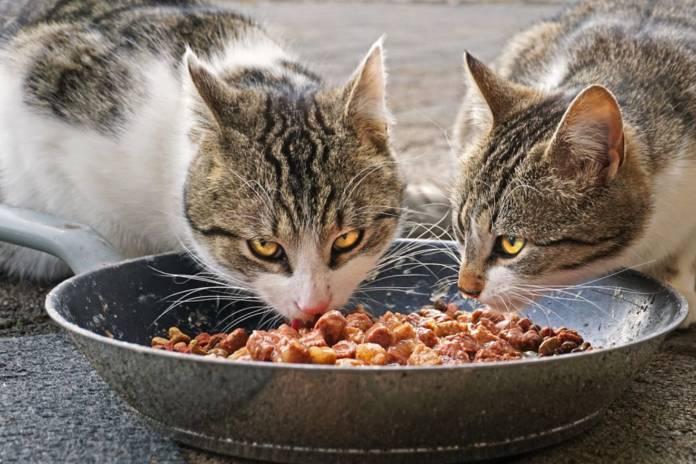 gesundes-katzenfutter-–-die-basis-fuer-ein-langes-katzenleben